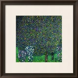 Roses Under the Trees, circa 1905 Framed Giclee Print by Gustav Klimt
