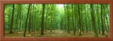 Pathway Through Forest, Mastatten, Germany Framed Photographic Print by  Panoramic Images