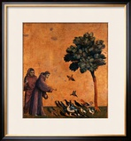St. Francis of Assisi Preaching to the Birds Framed Giclee Print by  Giotto di Bondone