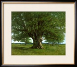 The Oak of Flagey, Called Vercingetorix Framed Giclee Print by Gustave Courbet