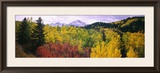 Trees on a Landscape, San Juan Mountains, Colorado, USA Framed Photographic Print by  Panoramic Images