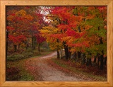 Carretera secundaria en otoño, Vermont, EEE UU Lámina fotográfica enmarcada por Charles Sleicher