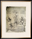 The Heart and the Circulation, Facsimile of the Windsor Book Framed Giclee Print by  Leonardo da Vinci