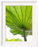 Lotus Leaf Texture Framed Photographic Print by Michele Molinari