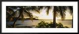 Palm Trees on the Coast, Kohala Coast, Big Island, Hawaii, USA Gerahmter Fotografie-Druck von  Panoramic Images