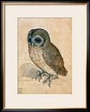 Sreech-Owl, 1508 Framed Giclee Print by Albrecht Dürer