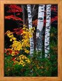 Fall Color, Old Forge Area, Adirondack Mountains, NY Gerahmter Fotografie-Druck von Jim Schwabel
