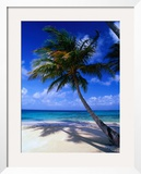 A Palm Tree Bends to the Caribbean Sea on a Key in the San Blas Islands, San Blas, Panama Framed Photographic Print by Alfredo Maiquez