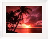 Palms And Sunset at Tumon Bay, Guam Framed Photographic Print by Bill Bachmann