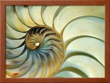 Close-up of Nautilus Shell Spirals Framed Photographic Print by Eric Kamp