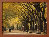 Central Park, New York City, Ny, USA Framed Photographic Print by Walter Bibikow