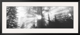 Road, Redwoods Park, California, USA Framed Photographic Print by Panoramic Images 