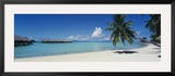 Palm Tree on the Beach, Moana Beach, Bora Bora, Tahiti, French Polynesia Framed Photographic Print by  Panoramic Images