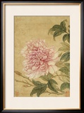 Peony Framed Giclee Print by Yun Shouping
