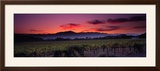 Vineyard at Sunset, Napa Valley, California, USA Framed Photographic Print by Panoramic Images