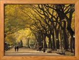 Central Park, New York City, Ny, USA Gerahmter Fotografie-Druck von Walter Bibikow