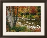 Swift River with Aspen and Maple Trees in the White Mountains, New Hampshire, USA Framed Photographic Print by Darrell Gulin