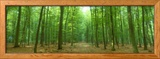 Pathway Through Forest, Mastatten, Germany Ingelijste fotodruk van Panoramic Images,