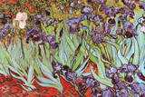 Vincent Van Gogh Irises Art Print Poster Prints