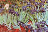 Vincent Van Gogh Irises Art Print Poster Prints