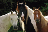 Tres Caballos (Three Horses) Art Poster Print Posters