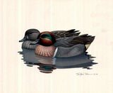 Richard Sloan (Wood Ducks in Water) Art Poster Print Posters