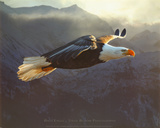 Steve Bloom Bald Eagle Art Print Poster Prints