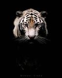 Bengal Tiger Art Print Poster Posters