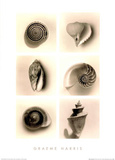 Shell Composition I Posters av Graeme Harris