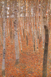 Gustav Klimt Forest of Beech Trees Art Poster Print Prints