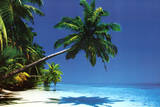 Maldives (Palm Tree Over Beach) Art Poster Print Posters