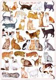 Wandkaart met overzicht van katten van overal ter wereld Poster