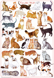Gatos del mundo, gráfico educativo, en inglés, póster Póster