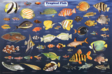 Laminated Tropical Fish Educational Science Chart Poster Foto