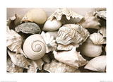 ie Still Life with Shells Posters par Rene & Barbara Stoeltie