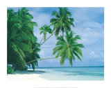 Maldive Islands (Tropical Palm Trees) Print