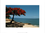 The Red Tree, Cuba Prints by Angelo Cavalli