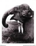 John Drysdale (An Elephant Never Forgets) Art Poster Print Masterprint