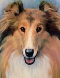 Collie (Close-Up) Art Poster Print Print