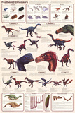 Feathered Dinosaurs Educational Science Chart Poster Fotografia