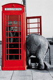 Its for You (Elephant in Phone Booth) Art Poster Print Prints