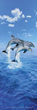 Steve Bloom (Three Dolphins, Door) Art Poster Print Photo