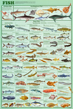 Fish Educational Science Educational Science Chart Poster Posters
