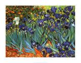 Blå iris, Saint-Remy, ca. 1889|Irises, Saint-Remy, c.1889 Plakater av Vincent van Gogh