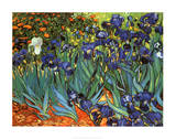 Irises, Saint-Remy, c.1889 Posters by Vincent van Gogh