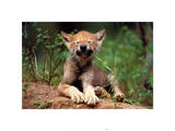 Wolf Cub Posters by Art Wolfe