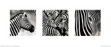 Zebras Triptych Plakater