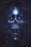 Vanitas (Skull) Art Poster Print Posters