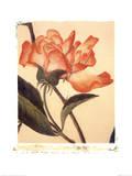 Orange Rose Poster by Deborah Schenck