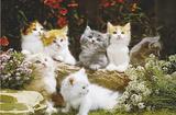 Baby Cats (Kittens Photo) Art Poster Print Photo